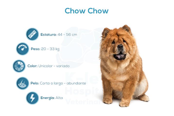 Chow chow pelo largo y pelo corto