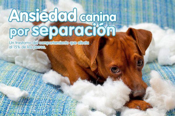 Ansiedad canina por separación