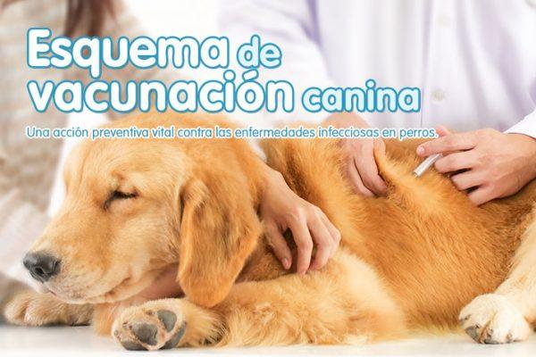 Esquema de vacunación canina
