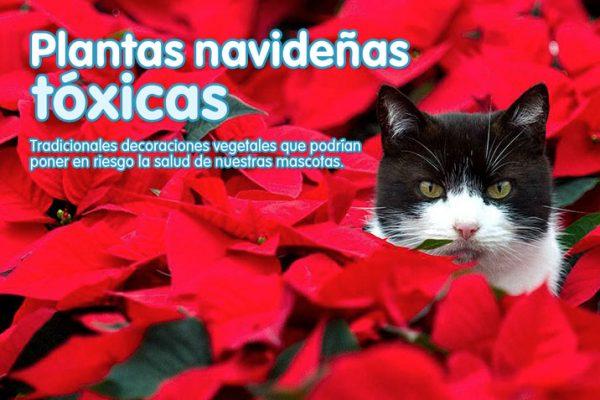 Plantas navideñas tóxicas