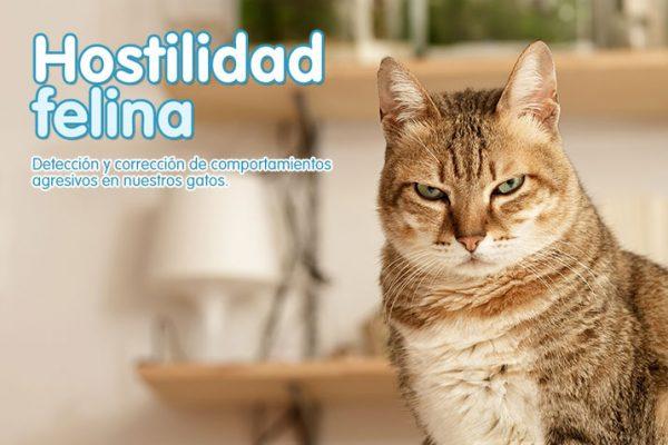 Hostilidad felina