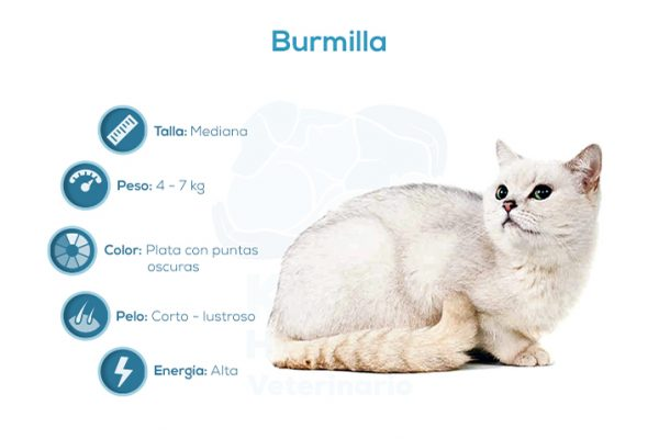 Burmilla