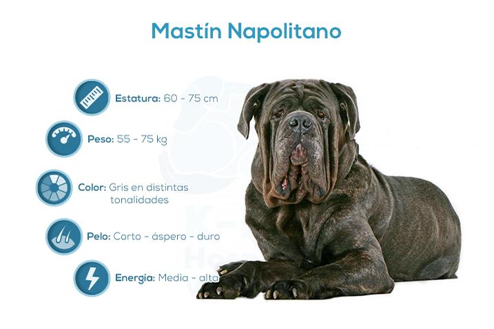 Mastin Napolitano Hospital Veterinario K Lev