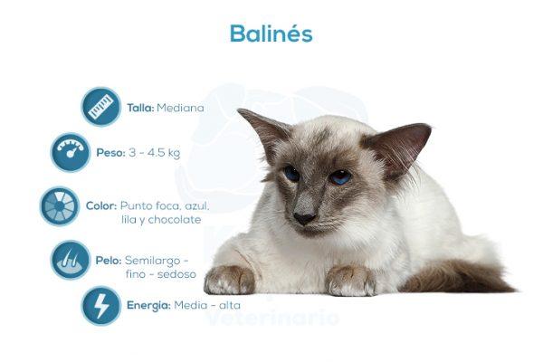 Balinés