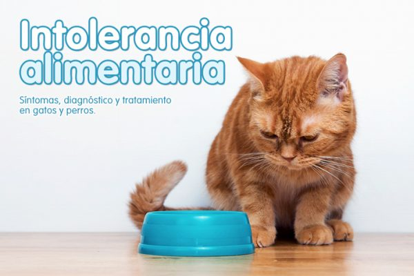 Intolerancia alimentaria