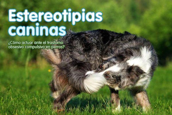 Estereotipias caninas