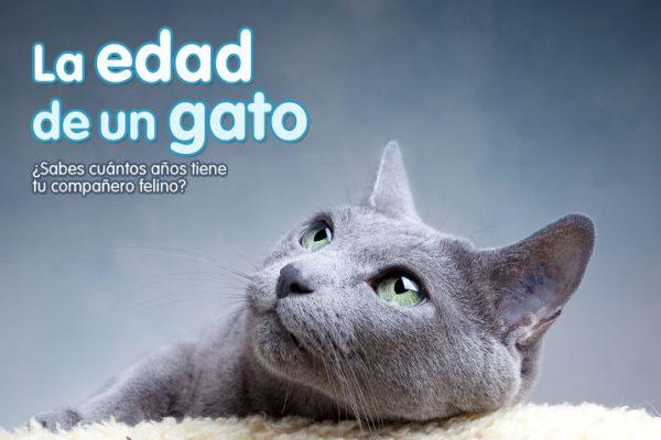La edad de un gato