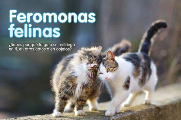 Feromonas felinas