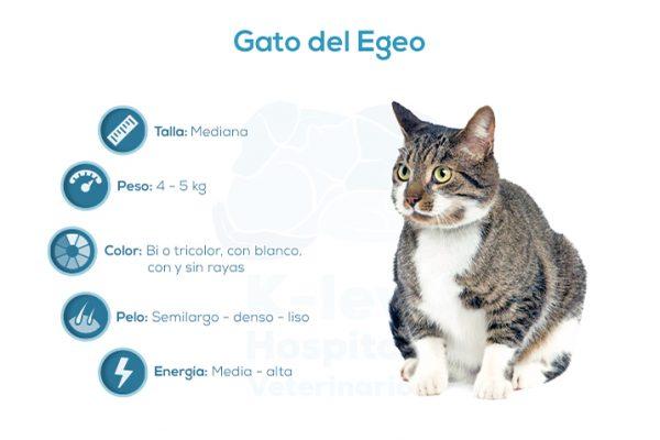 Gato del Egeo