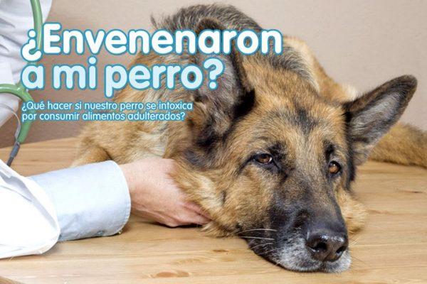 ¿Envenenaron a mi perro?