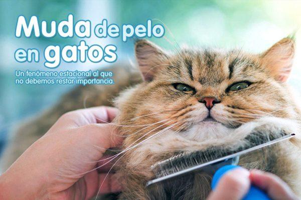 Muda de pelo en gatos