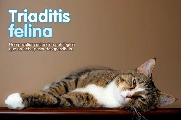 Triaditis felina
