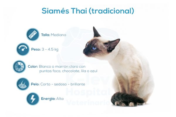 Siamés Thai (tradicional)