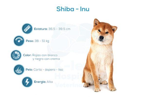 Shiba – Inu