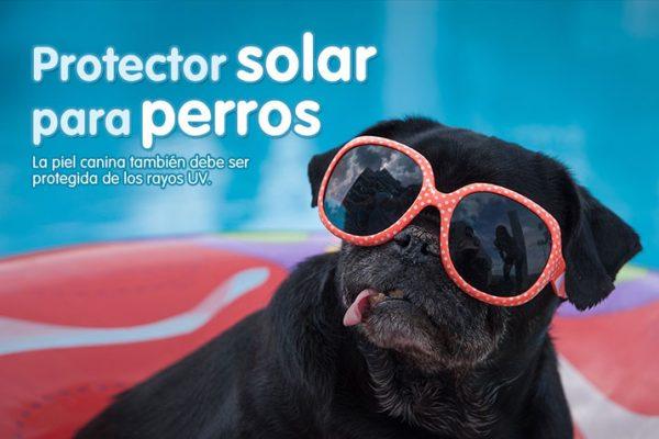 Protector solar para perros
